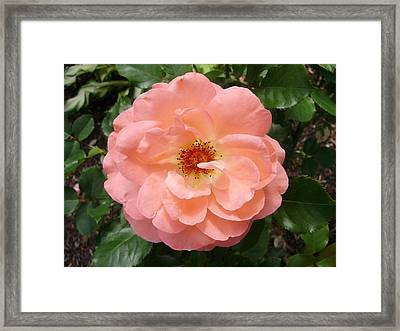 Wink Wink Framed Print by Emerald GreenForest