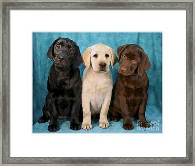 Winkin Blinkin And Nod  Lab Puppies Framed Print by Maxine Bochnia