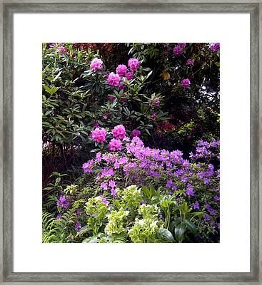 Winter And Spring Flowers Framed Print by Sandra Maddox