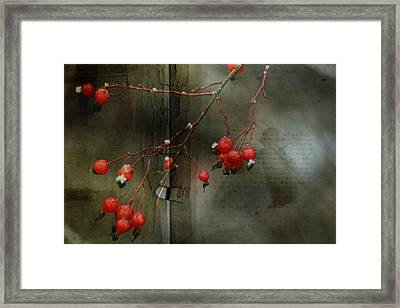 Winter Berries Framed Print by Bonnie Bruno