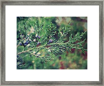 Framed Print featuring the photograph Winter Berries by Robin Dickinson