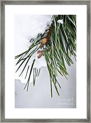 Winter Branches Framed Print by Elena Elisseeva
