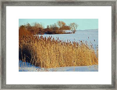 Winter Breeze Framed Print by Aimee L Maher Photography and Art Visit ALMGallerydotcom