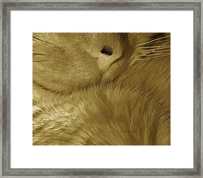 Winter Coat Framed Print