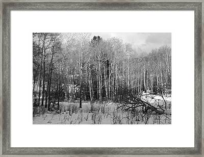 Winter Cold Framed Print by Paul Marto