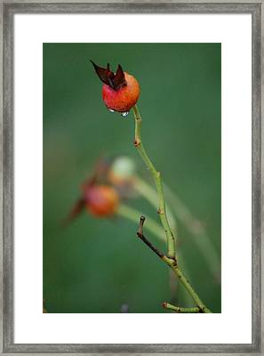 Winter Colour Framed Print by Dickon Thompson