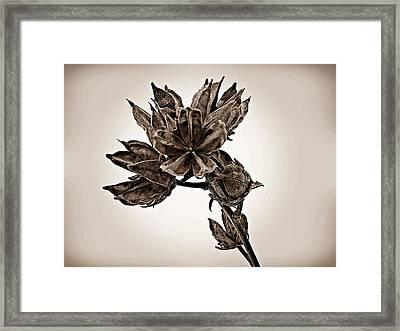 Winter Dormant Rose Of Sharon - S Framed Print