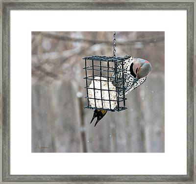 Framed Print featuring the photograph Winter Feeding by Edward Peterson