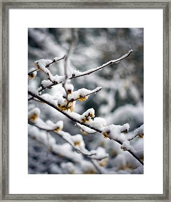 Winter Fleurs Framed Print by Mike Reid