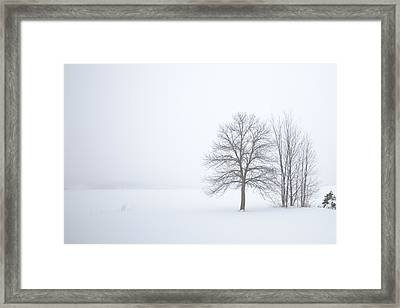 Winter Fog And Trees Framed Print
