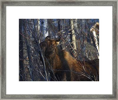 Framed Print featuring the photograph Winter Food by Doug Lloyd