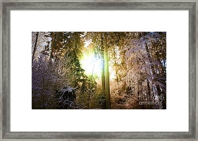Winter Forest Framed Print