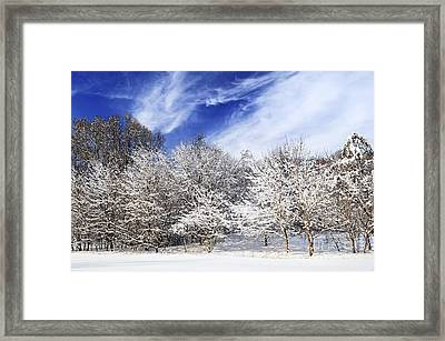 Winter Forest Covered With Snow Framed Print by Elena Elisseeva