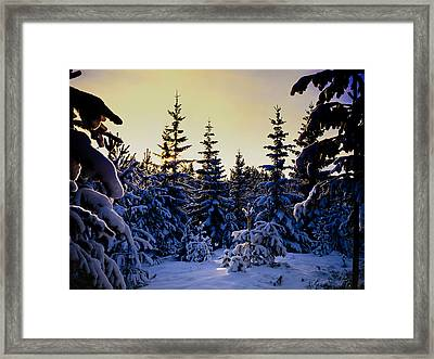 Winter Forest Framed Print by Hakon Soreide