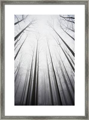 Winter Forest In Mist Framed Print by Jack Flash
