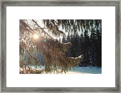 Winter Framed Print by Franz Roth