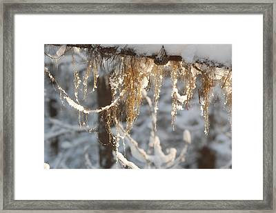 Winter Frost Beards Framed Print