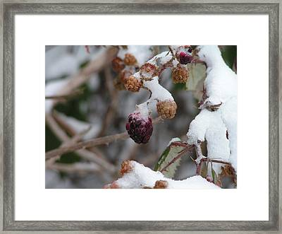 Winter Fruit Framed Print