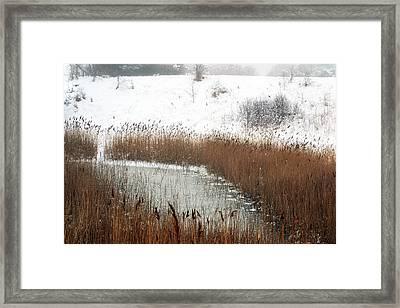 Winter Gold Framed Print