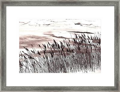 Winter Grasses Framed Print