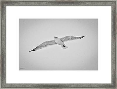 Framed Print featuring the photograph Winter Gull by Kevin Munro