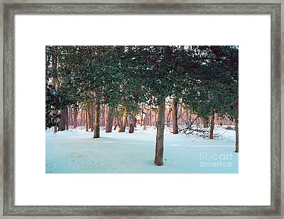 Winter Holly Framed Print by George Oze