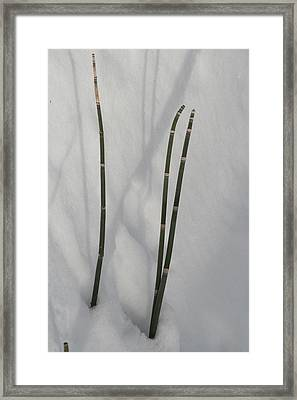 Winter Horse Tails Framed Print
