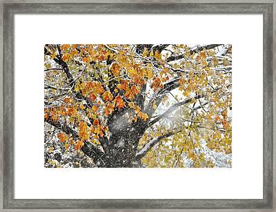 Winter Autumn Collide Framed Print by JAMART Photography