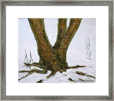 Winter In Brooklyn Botanic Garden Framed Print by Anna Folkartanna Maciejewska-Dyba