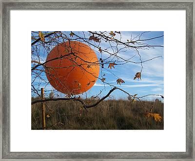 Winter In Orange County Framed Print by Steve Huang