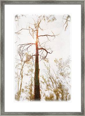 Winter In The Woodlands Framed Print by Erica Horsley