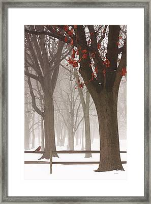 Winter In The Woods Framed Print by Tom York Images