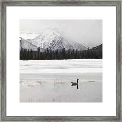 Winter Landscape, Banff National Park Framed Print by Keith Levit