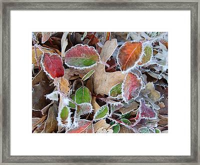 Winter Leaves Framed Print by Linda Pope