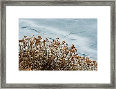 Winter Life Framed Print
