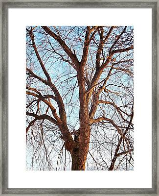 Framed Print featuring the photograph Winter Light by Chalet Roome-Rigdon