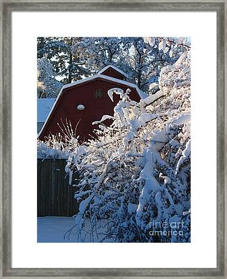 Winter Look Framed Print by Greg Patzer