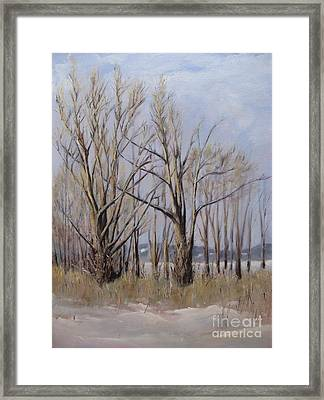 Winter Maples Framed Print