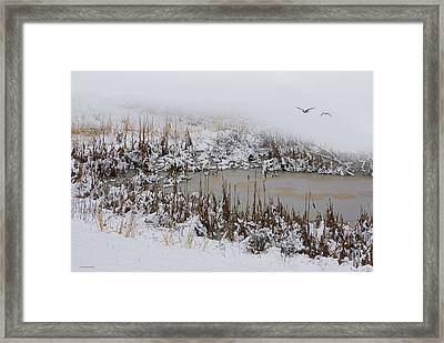 Winter Marsh Framed Print