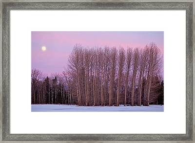 Winter Moon Framed Print by Marie-Dominique Verdier
