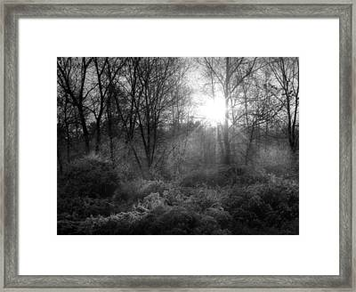 Winter Morning Framed Print by Cindy Haggerty