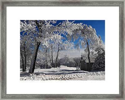 Winter Morning Framed Print by Lois Bryan