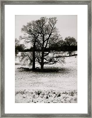 Framed Print featuring the photograph Winter Oaks by John Colley