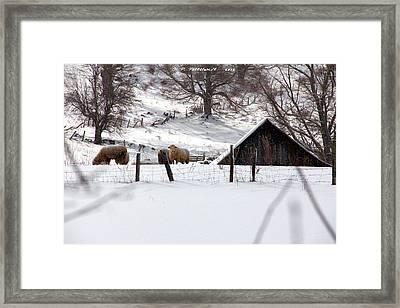 Winter On The Farm Framed Print by Carolyn Postelwait