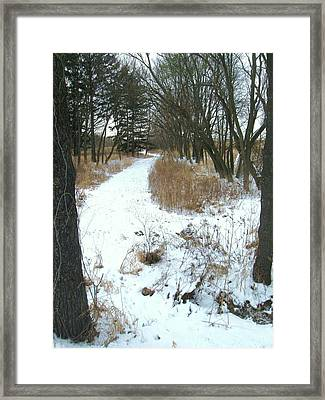 Winter Path Framed Print by Todd Sherlock