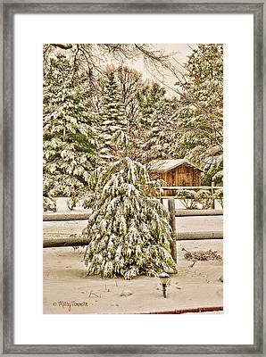 Framed Print featuring the photograph Winter Pine by Mary Timman