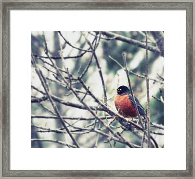 Framed Print featuring the photograph Winter Robin by Robin Dickinson