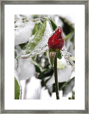 Winter Rose Framed Print by Tanya  Searcy