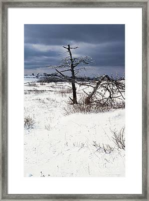 Winter Shenandoah National Park Framed Print by Thomas R Fletcher
