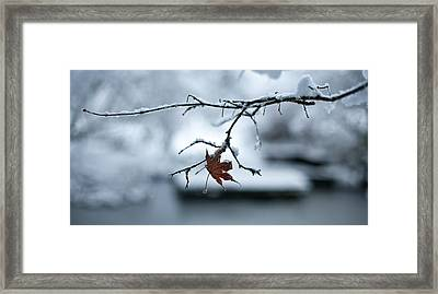 Winter Solo Framed Print by Mike Reid